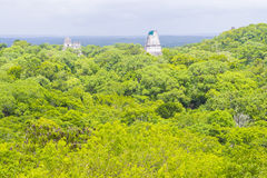 Tikal Nationaal Park Stock Foto