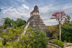 Tikal National Park. In Guatemala Stock Images