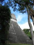 Tikal National Park, Guatemala Stock Images