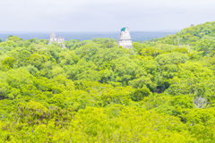 Tikal nationalpark royaltyfri bild