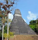 Tikal park narodowy Fotografia Royalty Free