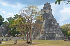Tikal park narodowy Obraz Royalty Free