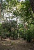 Tikal parkerar Sightobjekt i Guatemala med Mayan tempel och ceremoniel fördärvar Tikal är en forntida Mayan citadell i regnet royaltyfri fotografi