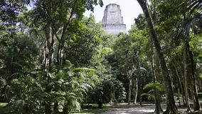 Tikal - parte superior do templo Imagens de Stock Royalty Free