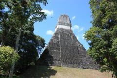 Tikal - pirâmide 1 Fotografia de Stock