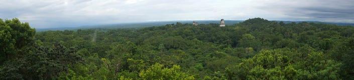 Tikal Piramids Fotografering för Bildbyråer