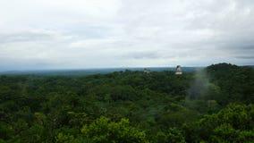 Tikal Piramids Royaltyfri Fotografi