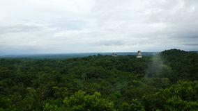 Tikal Piramids Royalty Free Stock Photography