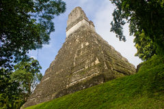Tikal Pyramid Royalty Free Stock Photography