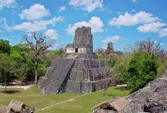 Tikal Pyramids, Guatemala royalty free stock photography