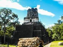 Tikal pyramidtempel 2 Guatemala royaltyfri bild
