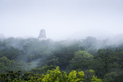 Tikal ruins Royalty Free Stock Images