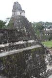 Tikal Ruins Royalty Free Stock Image