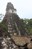 Tikal Ruins Stock Images