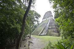 Tikal's hidden temples. One of Tikal's temples hidden in the forest Stock Images