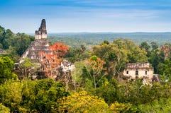 Tikal-Tempel Stockfoto