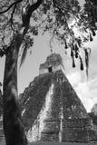 tikal tempel 4 Royaltyfri Bild