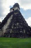 tikal tempel Royaltyfri Bild