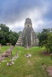 Tikal tempel I, tempel av den stora Jaguar i den huvudsakliga plazaen av Arkivfoto