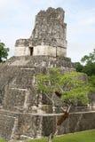 tikal tempel ii Royaltyfria Bilder