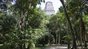 Tikal - top of the temple. Maya-temple, tikal, Guatemala, hidden in the jungle Royalty Free Stock Images