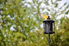 Tiki Torch Royalty Free Stock Photos