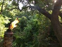 Tiki Torch bruciante in foresta Fotografia Stock Libera da Diritti