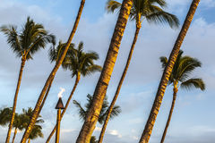 Tiki Torch And Palm Trees Royalty Free Stock Photo