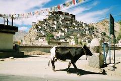 Tikse Gompa, un monastero buddista in Ladakh, India Fotografia Stock Libera da Diritti