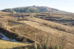 Tikvesh vineyards. Kavadarci. Macedonia. Royalty Free Stock Photo