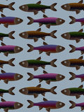 Tilable Fish Pattern. Multi-colored Tilable vector Fish Pattern, rainbow colored fish pattern vector illustration