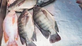 Tilapia του Νείλου το φρέσκο ψάρι στην πώληση στην επανάλειψη ανοξείδωτου έχει το διάστημα αντιγράφων στοκ εικόνες