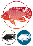 Tilapia. The figure shows the tilapia fish Royalty Free Stock Photos