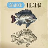 Tilapia or cichlid fish sketch for restaurant menu. Sign with tilapia or cichlid fish. Sketch of fish or hand drawn seafood trophy, water animal for restaurant Stock Photos