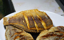 Tilapia deep-fried. By palm-oil Stock Images