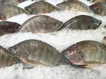 Tilapia do Nilo Peixes do Tilapia na cubeta de gelo Peixes no supermercado fotos de stock