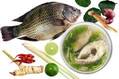 Tilapia e pesce bollito di tilapia in ciotola e curry puri sulla parola tailandese di Tom-igname-pla del fondo bianco, pesce degl fotografie stock libere da diritti