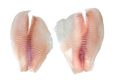 Tilapia fillet fish. Isolated on white background stock photography