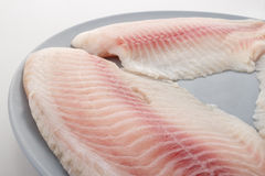 Tilapia fillet Royalty Free Stock Images