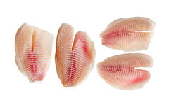 Tilapia Fillets Royalty Free Stock Image