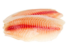 Tilapia fillets isolated on white background Stock Images