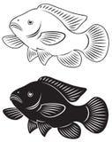 Tilapia fish stock illustration