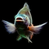 Tilapia Fish Fractal Royalty Free Stock Image