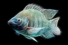 Tilapia Fish Fractals Royalty Free Stock Images