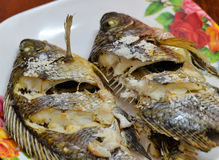 Tilapia fish grill Royalty Free Stock Photography