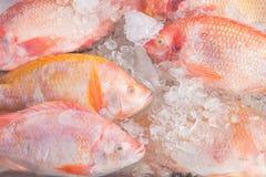 Tilapia Fish on ice in the market Thailand. Tilapia Fish on ice in the market Thailand Stock Photo