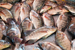 Tilapia fish in market Stock Photos