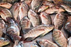 Tilapia fish in market Stock Photos
