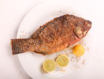 Tilapia fish meal. Tilapia fish on modern dish over white background stock image