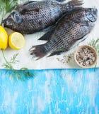 Tilapia fish Stock Image